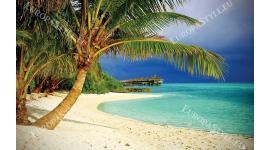 Фототапети самотна палма на океански бряг морски пейзаж