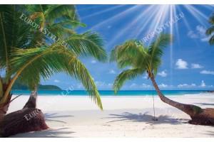Фототапети слънчеви палми бряг