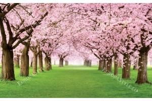 Фототапети поляна с прекрасни розови дървета