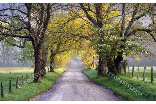 Фототапети селски път с корони на дървета