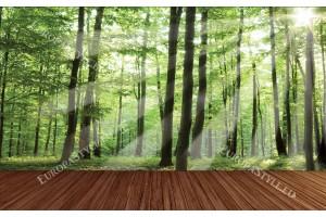 Фототапети зелена гора с дървена платформа
