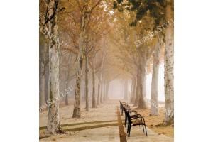 Фототапет красив парк с дървета и пейки