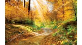 Фототапети есенна гора огрята от слънчеви лъчи