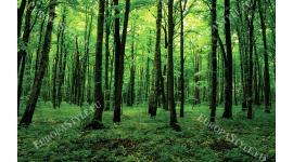 Фототапет изглед зелена гора 2