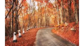 есенен пейзаж шосе покрай гора