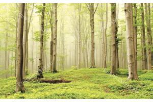 Фототапет изглед на гора дървета в светли тонове