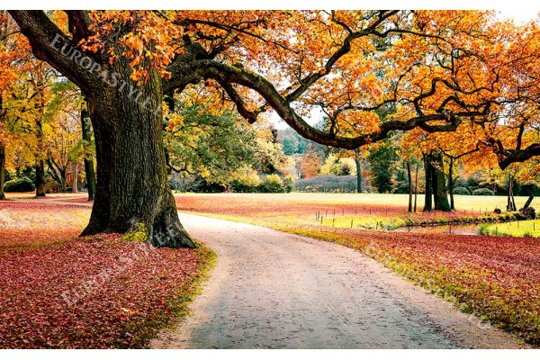 Фототапет есенен пейзаж дърво с надвесени клони