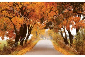 път с есенни корони на дървета