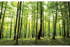 Фототапет изглед зелена гора