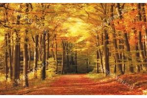 Фототапет пътека есен в гората