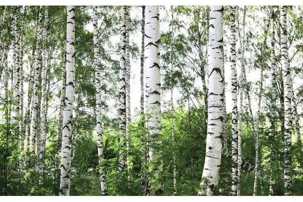Фототапет брезова гора модел 3