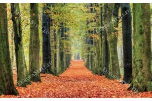 Фототапет красива цветна гора с пътека