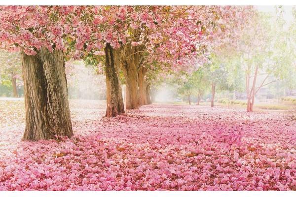 Фототапет алея с розови дървета с килим от розов цвят