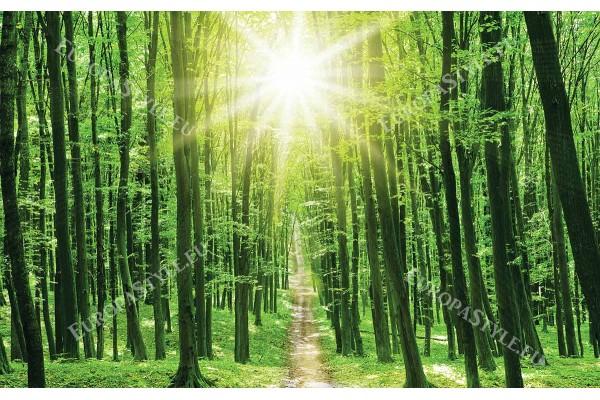 Фототапет зелена гора със слънце и пътека