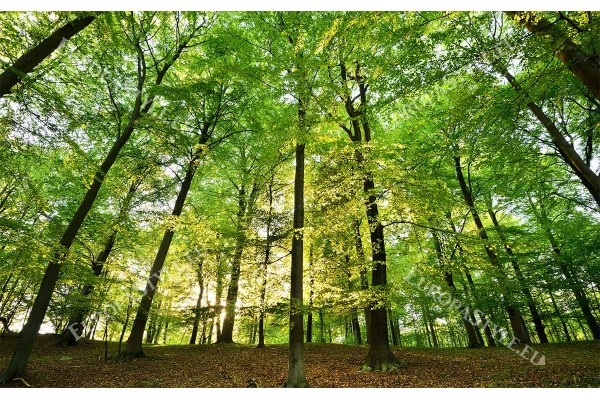 Фототапет зелена гора панорамен изглед