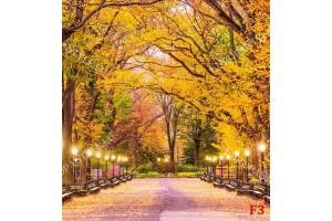 Фототапет красива паркова алея осветена