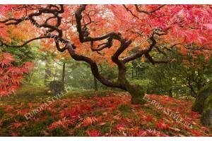 Фототапет величествено есенно дърво