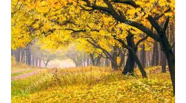 Фототапет гора и пътека с жълти листа и наклонени дървета