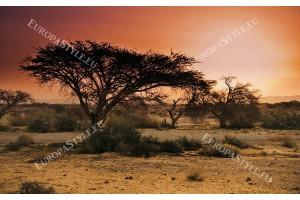 Фототапет гледка Африка савана залез