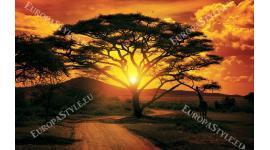 Фототапет размер 330 см-260 см - Африка