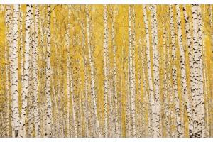 Фототапет брезова гора в жълто