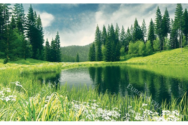 красива гледка с езеро край борова гора