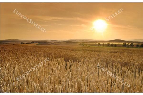 Фототапет житно поле при залез