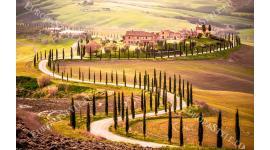 прекрасен изглед от Тоскана алея дървета 2 цвята