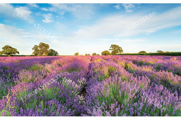 Фототапет красив пейзаж на поле с шарена лавандула