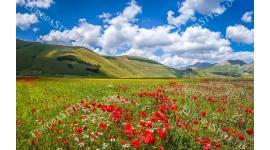 Фототапет слънчево поле с червени макове