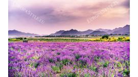 Фототапет красива природа полски пейзаж в лилаво