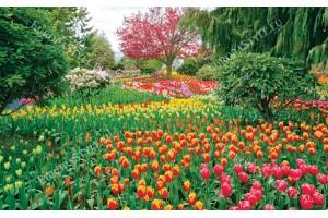 Фототапети градина с красиви лалета