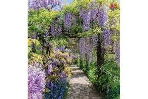 Фототапет градина пейзаж пергола-арка с лилава глициния