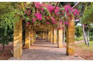 Фототапет цветна градинска арка в 2 цвята