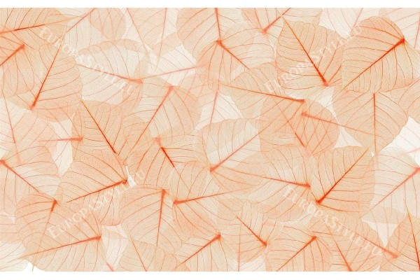 Фототапети листа структура в оранжева гама