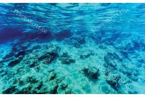 Фототапети морско подводно дъно красива гледка