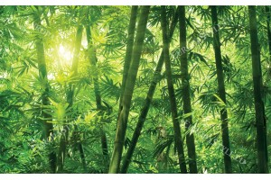 Фототапети зелена бамбукова гора