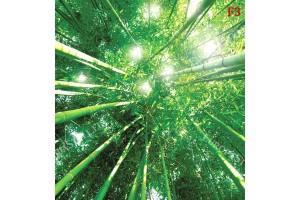 Фототапети бамбукова гора изглед от долу