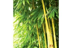 Фототапети бамбукови дървета листа