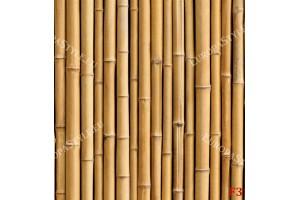 Фототапет стена реден бамбук