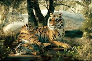 Фототапет рисувана картина тигър малките си