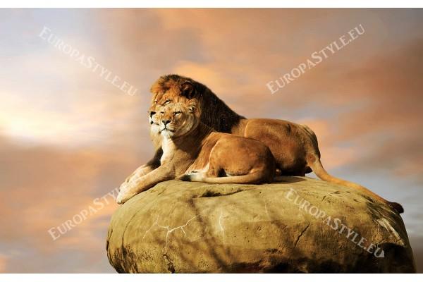 Фототапет двойка лъвове на скала