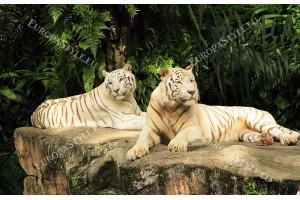 Фототапет двойка бели тигри