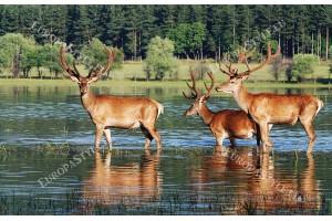 Фототапет тройка елени в река