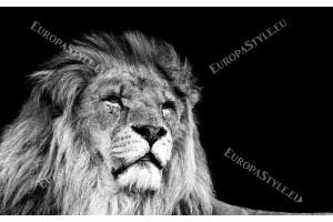 Фототапет голяма лъвска глава на черен фон