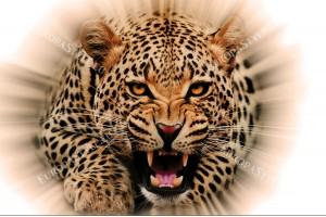 Фототапет леопард светлинен ефект в оранжево