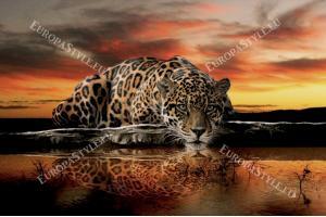 Фототапет леопард при залез в оранжево