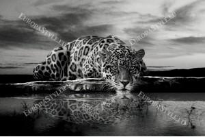 Фототапет леопард при залез в сиво