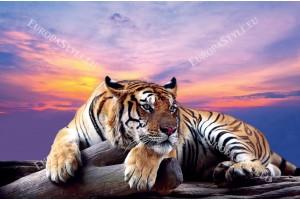 Фототапет голям тигър на фона на лилав залез