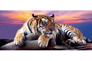 Фототапет-30% размер 250 см-107 см - Тигър